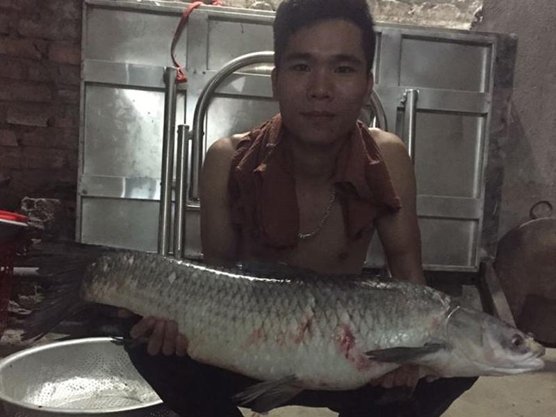 hướng dẫn cách làm mồi câu cá chép - Câu cá